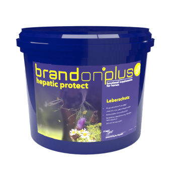 Brandon® plus hepatic protect - Ondersteunt het herstel van de levercellen