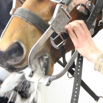 Halster gebitsverzorging pony