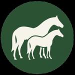 Paardtype
